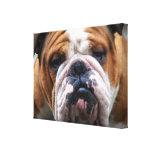 My Grumpy Dog is Saying Bulldog !!!
