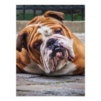 My Grumpy Dog is Saying Bulldog !!! Photo Print