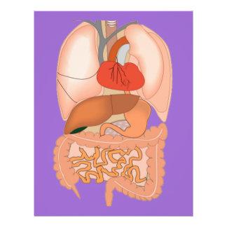 My Guts, Digestive Organs 21.5 Cm X 28 Cm Flyer