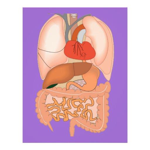 My Guts, Digestive Organs Custom Flyer