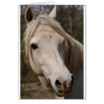 My horse face greeting card