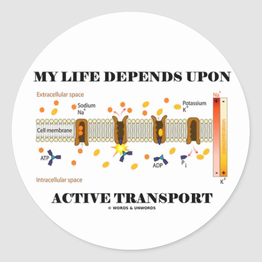 My Life Depends Upon Active Transport (Humor) Round Sticker