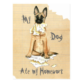 My Malinois Ate My Homework Postcard