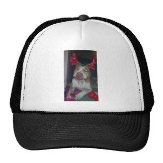 My reindeer cap