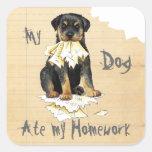 My Rottie Ate My Homework Square Sticker