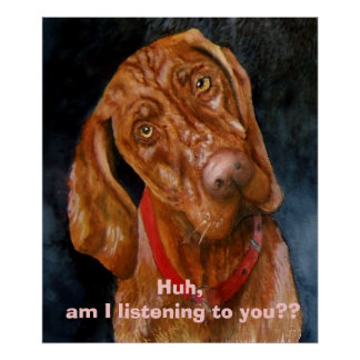 My Vizsla, Huh, am I listening to you?? Poster