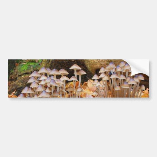 Mycena Inclinata Clustered Bonnet Mushroom Fungi Bumper Stickers