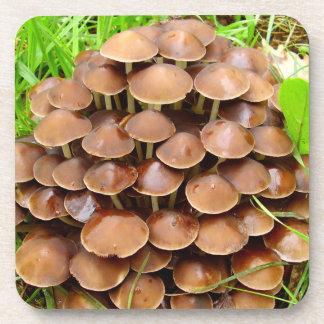 Mycena inclinata Mushroom Hard Plastic Coasters