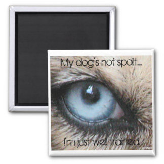 Mydogs not spoilt I m just well trained Magnets