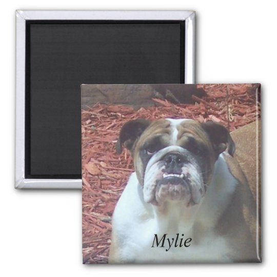 Mylie English Bulldog Square Magnet