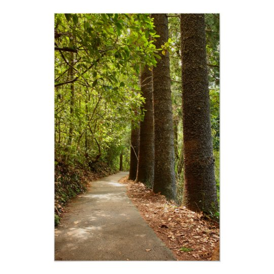 Mysterious Forest Path Poster