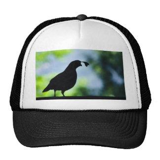 Mysterious Quail Hats
