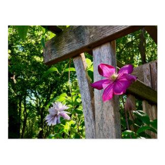 Mystic Clematis Flower Postcard