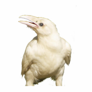 Mystic White Raven Wildlife Sculpted Gift Item Photo Sculptures
