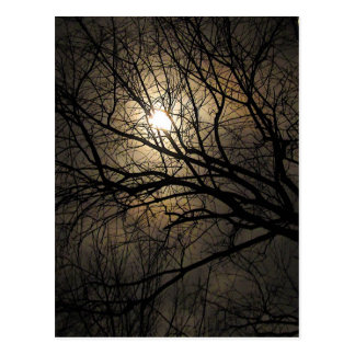 Mystical Moon Postcard