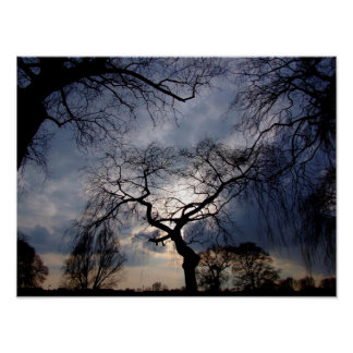 Mystical Night, Moon shining through Trees Poster