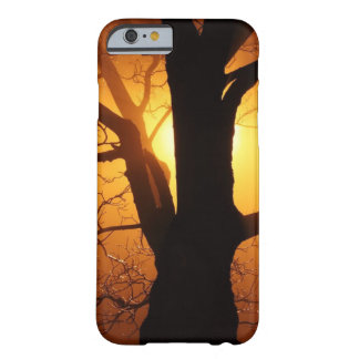 Mystical Tree with Orange Sunset Behind Barely There iPhone 6 Case