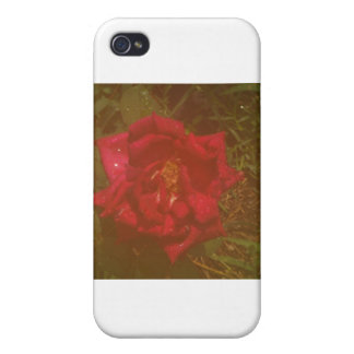 mysty rose iPhone 4 cover