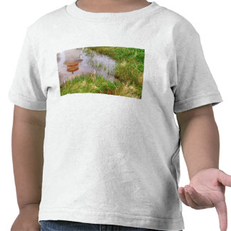 N.A. Canada, Nova Scotia, Peggy's Cove. Shirt