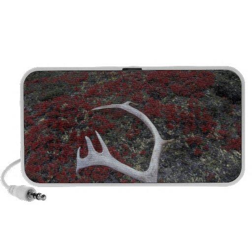 N.A., USA, Alaska, A.N.W.R. Caribou antler lies iPod Speakers