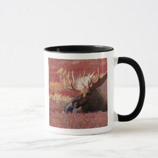 N.A., USA, Alaska, Denali National Park, Bull Mug