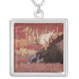 N.A., USA, Alaska, Denali National Park, Bull Silver Plated Necklace