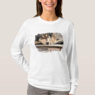 N.A., USA, Alaska. Husky sled dogs at 2 T-Shirt