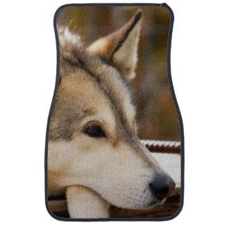 N.A., USA, Alaska. Husky sled dogs at 3 Floor Mat