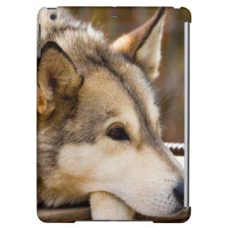 N.A., USA, Alaska. Husky sled dogs at 3 iPad Air Case