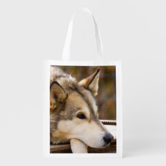 N.A., USA, Alaska. Husky sled dogs at 3 Reusable Grocery Bag