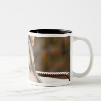 N.A., USA, Alaska. Husky sled dogs at 3 Two-Tone Coffee Mug