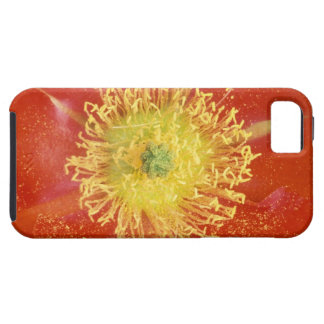 N.A., USA, Arizona, Casa Grande, NM, Desert iPhone 5 Covers