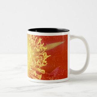 N.A., USA, Arizona, Casa Grande, NM, Desert Mug