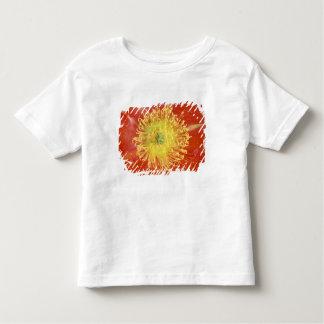N.A., USA, Arizona, Casa Grande, NM, Desert Tee Shirts