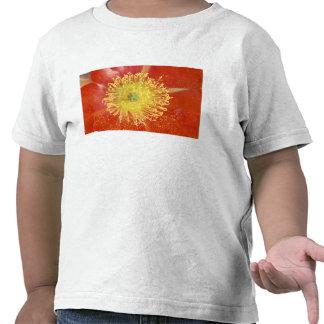 N.A., USA, Arizona, Casa Grande, NM, Desert Shirt