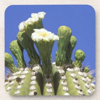 N.A., USA, Arizona, Tucson, Sonora Desert 2 Drink Coaster