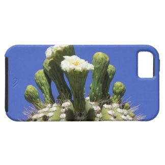 N.A., USA, Arizona, Tucson, Sonora Desert 2 iPhone 5 Cover