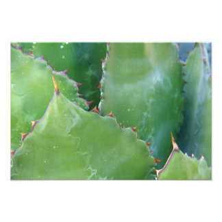 N A USA Arizona Tucson Sonora Desert 2 Photo Print