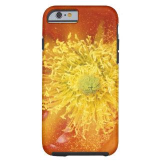 N.A., USA, Arizona, Tucson, Sonora Desert 3 Tough iPhone 6 Case