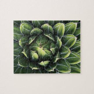 N.A., USA, Arizona, Tucson, Sonora Desert Jigsaw Puzzle