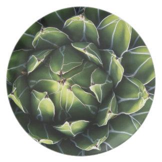 N.A., USA, Arizona, Tucson, Sonora Desert Plate