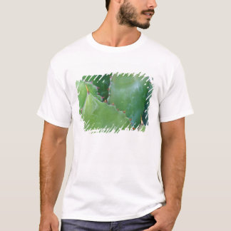 N.A., USA, Arizona, Tucson, Sonora Desert T-Shirt