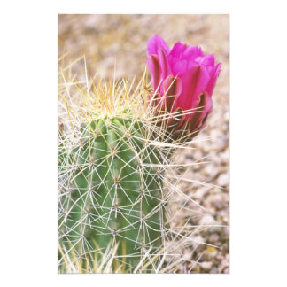 N A USA AZ Phoenix Desert Botanical 2 Photographic Print