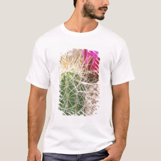 N.A., USA, AZ, Phoenix, Desert Botanical T-Shirt