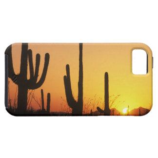 N.A., USA, AZ, Saguaro NP, Saguaro Sunset iPhone 5 Covers