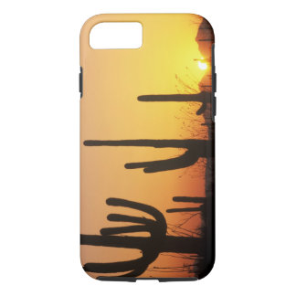N.A., USA, AZ, Saguaro NP, Saguaro Sunset iPhone 7 Case