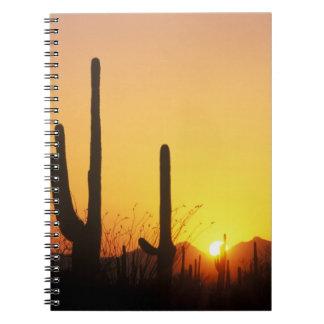 N.A., USA, AZ, Saguaro NP, Saguaro Sunset Notebook