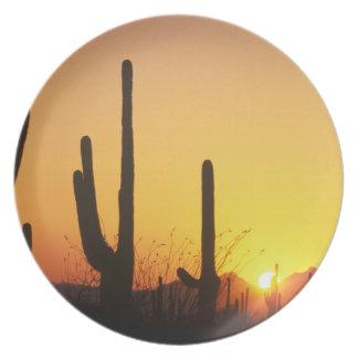 N.A., USA, AZ, Saguaro NP, Saguaro Sunset Plate