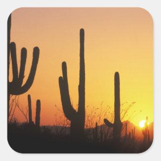 N.A., USA, AZ, Saguaro NP, Saguaro Sunset Square Sticker