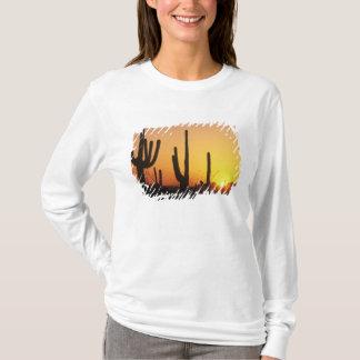 N.A., USA, AZ, Saguaro NP, Saguaro Sunset T-Shirt
